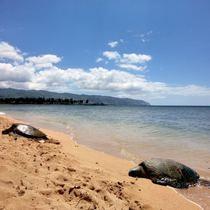 【セット予約でお得(D)】ハレイワの街へ! ハワイ人気ノースショア観光! マラサダや話題のガーリックシュリンプもご堪能!