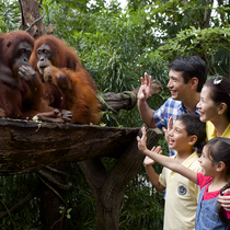 【早割50%OFF実施中】オランウータンと朝食 わくわくシンガポール動物園