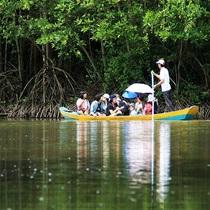 大自然&ワニ釣りを楽しめる神秘のマングローブ林 カンザーツアー【車内WIFI付き可/グループ】