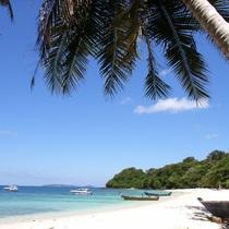 コーラル島1日観光