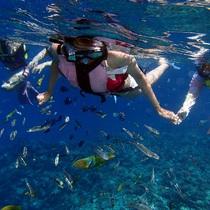 みんな島海水浴・ボートシュノーケルツアー★写真サービス付き by 沖縄アイランドクルー