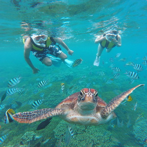 【最大7%OFF!!】たくさんのお魚に会える!竜宮城シュノーケリングツアー