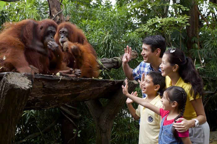 オランウータンと朝食 わくわくシンガポール動物園
