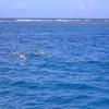 イルカウォッチング + ウミガメボートシ...の写真