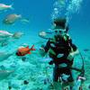 潜って飛んで グアムの自然を大満喫 パラ...の写真