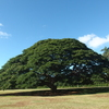 ノースショア人気スポットを巡る この木な...の写真