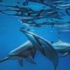 私立イルカ中学 野生のイルカと泳ぐ 南国...の写真