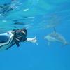 名門イルカ大学 野生のイルカやウミガメに...の写真
