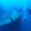 ウミガメ1ボートダイビング  (体験ダイ...の写真