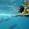 イルカと泳ぐ夢の体験♪ ハワイ神秘の海で...の写真