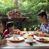 オランウータンと朝食 わくわくシンガポー...の写真