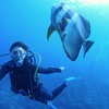 青の洞窟ボート体験ダイビング写真・動画・...の写真