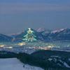 世界最大のクリスマスツリー観賞 ~歴史と...の写真