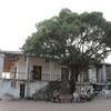 台南古跡を巡り、B級グルメ美食、塩田にて...の写真