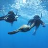 初心者OK♪絶景のハナウマ湾でシュノーケ...の写真