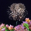July 4th 独立記念日クルーズ !...の写真