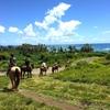 クアロア牧場 乗馬で広大な敷地を体感の写真