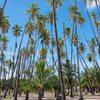【オアフ島発着】 モロカイ島日帰り観光の写真