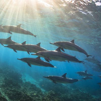 イルカと泳ぐ神秘体験♪大人気の私立イルカ...の写真