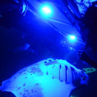 星空の下 幻想的な夜の海で野生のマンタと...の写真