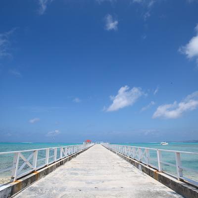 奇跡の海ココス島で人気アクティビティを半...の写真