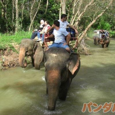 世界自然遺産カオヤイ 本格的象乗りトレッ...の写真