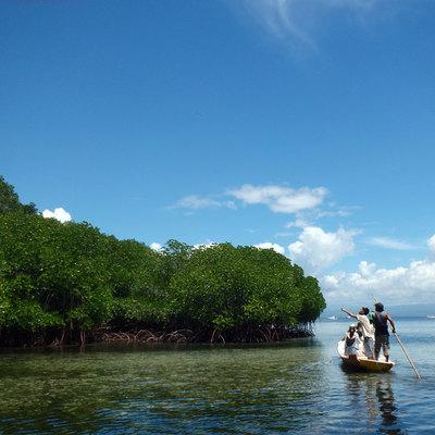 レンボンガン島 マングローブ & シュノ...の写真