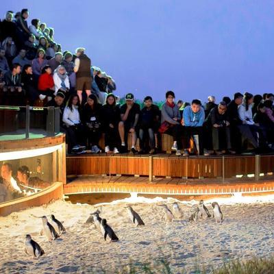 [日本語ガイド付き] ペンギンパレード&...の写真