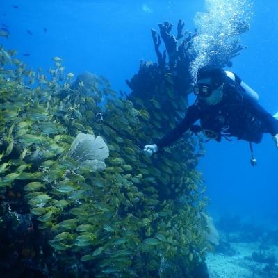 水中美術館ファンダイビングツアーの写真