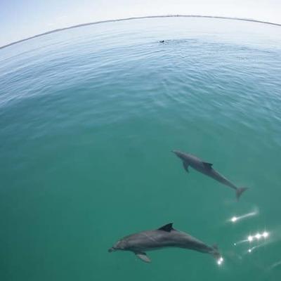 [シドニー発着] イルカウォッチングと砂...の写真