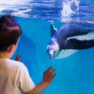 シーライフ・シドニー水族館の写真