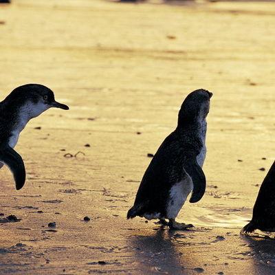 フィリップ島パークパスコンボパス(エコボ...の写真