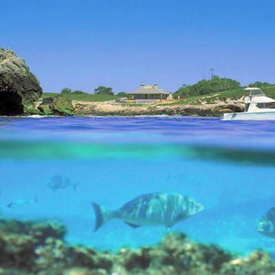 パース発ロットネスト島 往復フェリーチケ...の写真