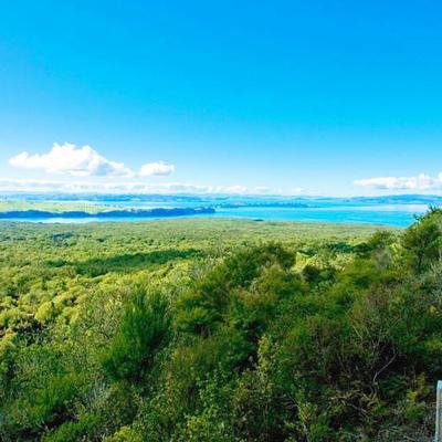 オークランド発ランギトト島ツアーの写真