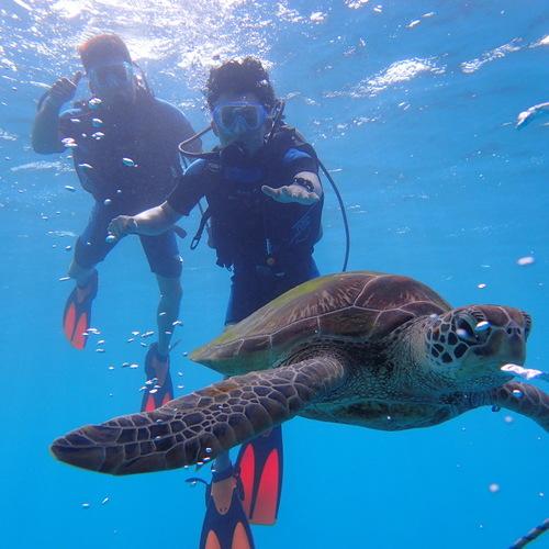ウミガメ体験ダイビング(1ビーチ + 1...の写真