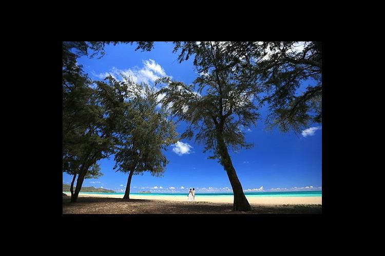 全米NO.1のワイマナロビーチでウェディ...の写真