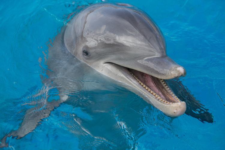 イルカとのふれあい体験が家族で楽しめる ...の写真