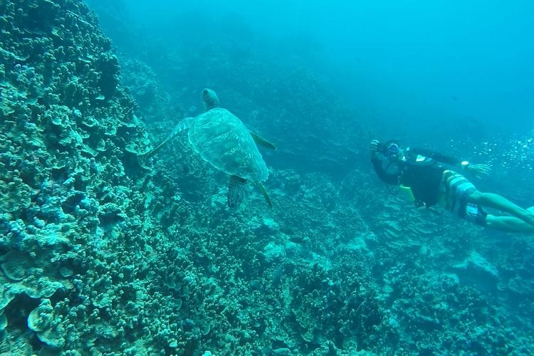 神秘の体験!! ウミガメと泳ぐ体験ダイビ...の写真