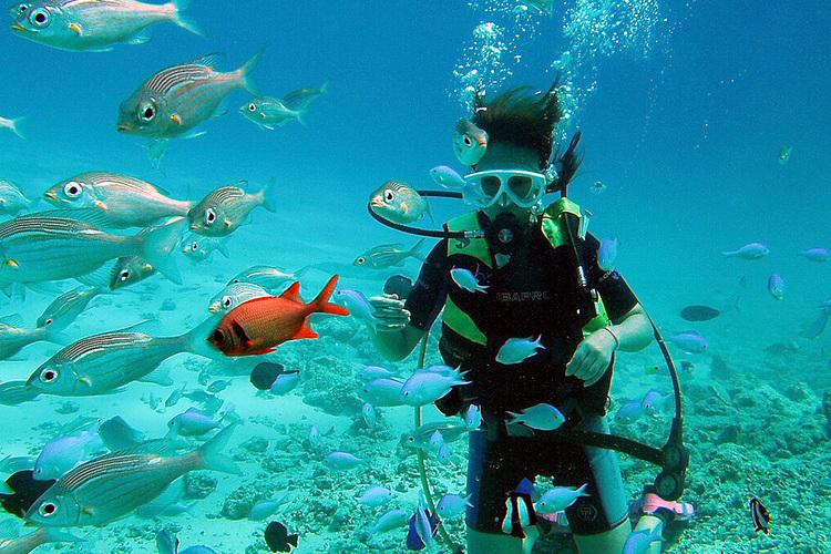 体験ダイビング キュートな熱帯魚と泳ごう...の写真