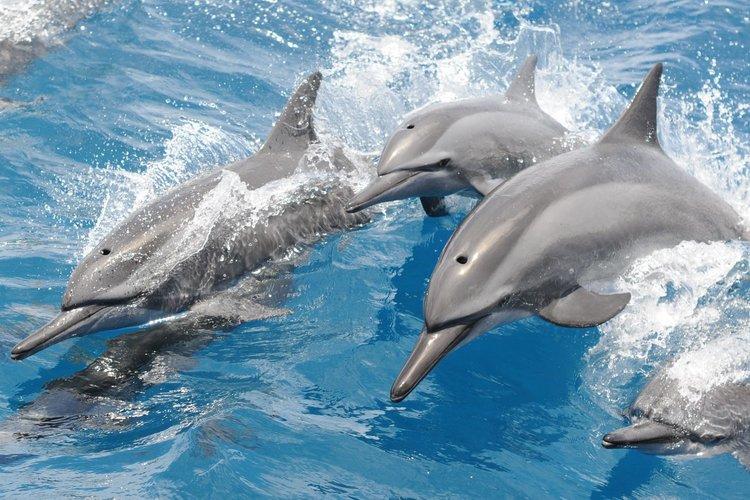 イルカ・熱帯魚と触れ合おう イルカウォッ...の写真