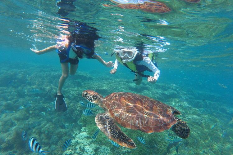 子供に大人気♪天然サンゴの海で竜宮城シュ...の写真