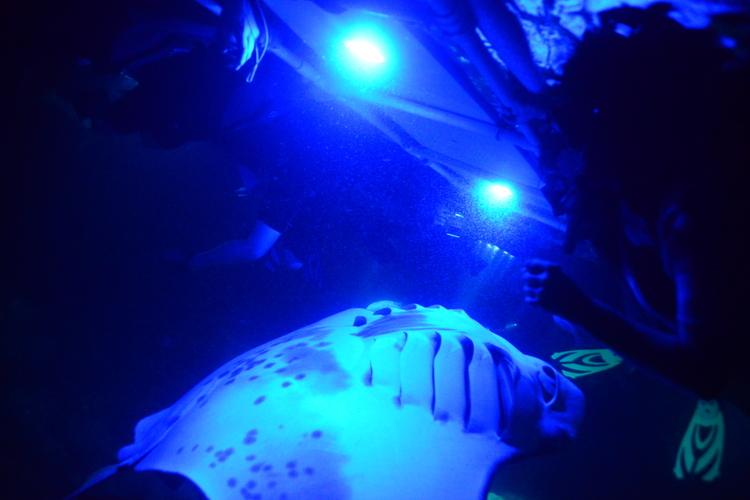 マンタ大学 野生のマンタとナイトシュノー...の写真