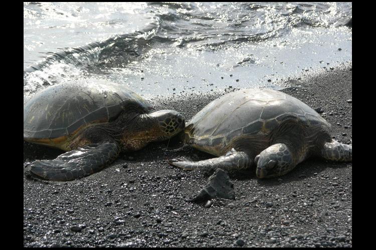ハワイ島日帰りツアー ヒロ市内観光 火山...の写真