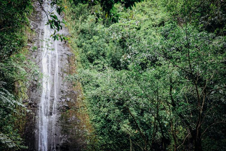 現地ガイドと行くマノアの滝ハイキングツア...の写真