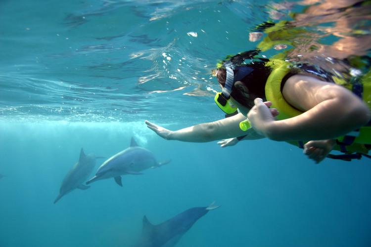 野生のイルカと泳ぐシュノーケリング 12...の写真