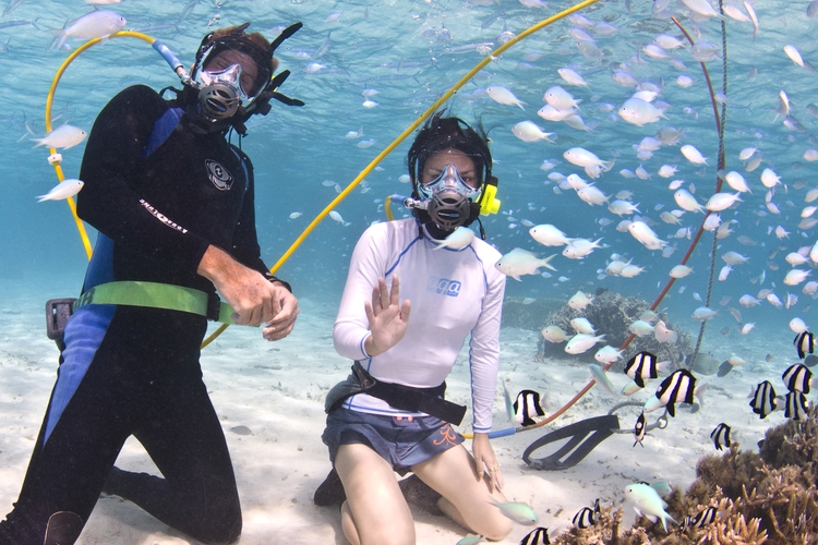 イルカに会いたい 水中探検もしたい アク...の写真