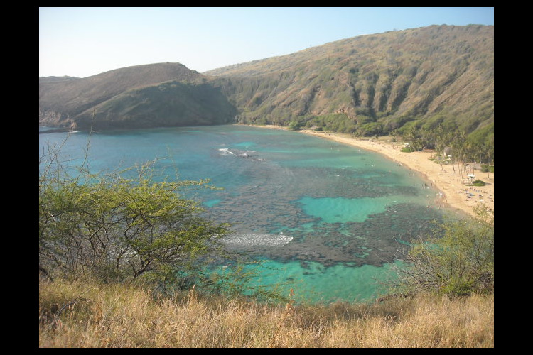 オアフ島1日観光 ホロホロツアー オアフ...の写真