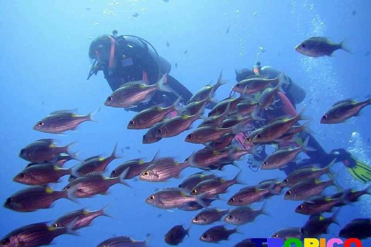 世界に誇る海に行こう!沖縄体験ダイビング...の写真
