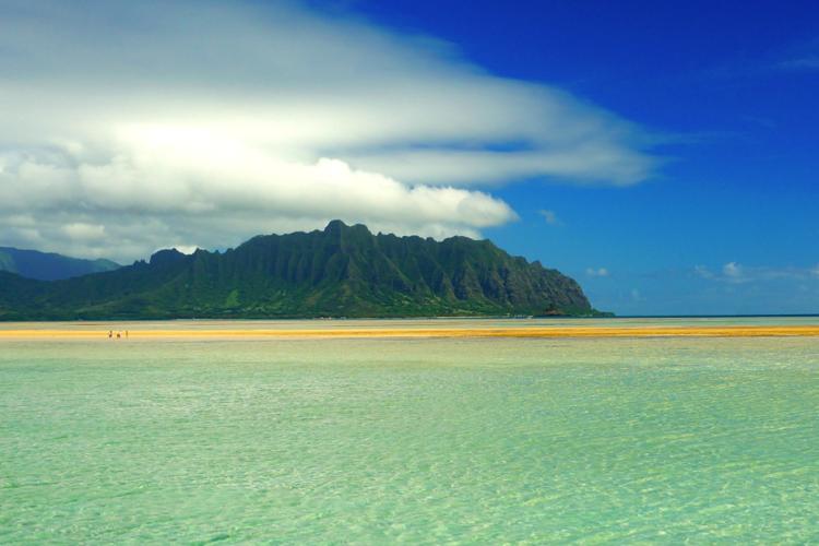 東海岸 + 幻の島サンドバーにてウミガメ...の写真