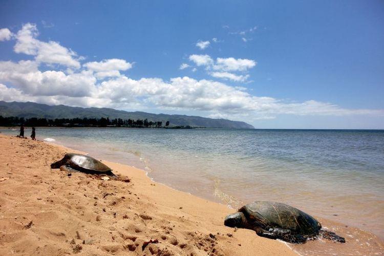 ハレイワの街へ... ハワイ人気ノースシ...の写真